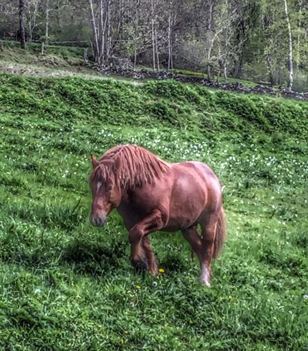 Hi! Taking Photos Naturelovers Nature Photography Horses Horsestagram