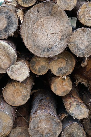 Full Frame Backgrounds No People Nature Large Group Of Objects Abundance Close-up Tree Stack Day Textured  Forest High Angle View Wood Wood - Material Outdoors Timber Land Pattern Log