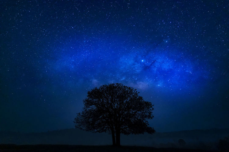 Silhouette of tree against starry sky at night