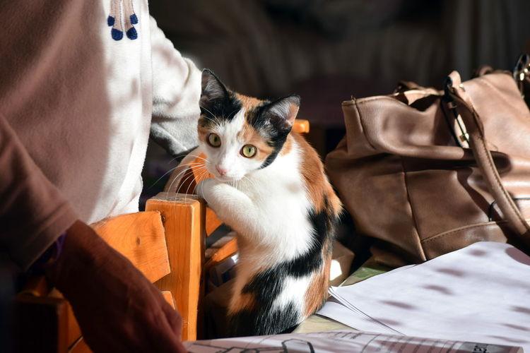 Cat sitting on paper
