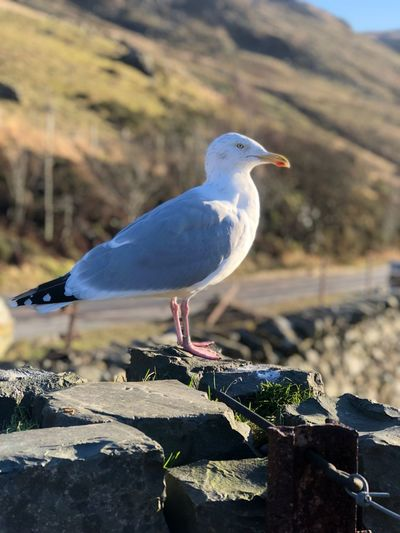 Bird Animal Themes Animals In The Wild One Animal Perching Day Animal Wildlife Seagull Sunlight Nature Close-up No People