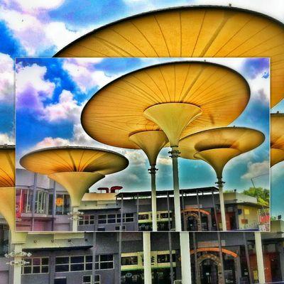 Architecture of mushroom