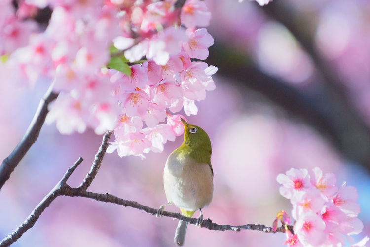 Close-up of birds perching on pink flower tree