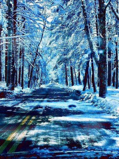 Winter Trees Winter Road Windy Road The Long And Winding Road! Snowstorm Trees Snowy Road The Week Of Eyeem EyeEm Gallery