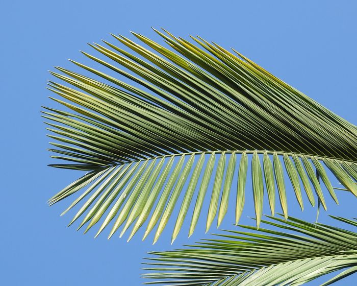 Minimalistic Beachphotography Backgrounds Wallpapers Clear Sky Blue Sky Sky Low Angle View Clear Sky Nature No People Blue Day Tree Leaf Palm Leaf Growth Plant Pattern Green Color Outdoors Palm Tree Sunlight