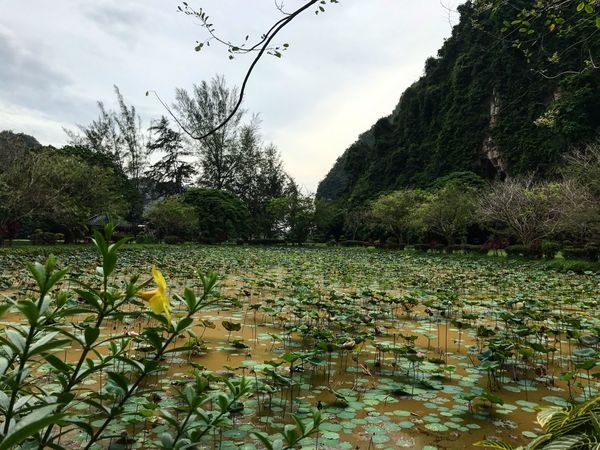Ipoh Ipoh,Malaysia Nature Beauty In Nature Water Tree Lake Green Color Cloud - Sky Traveling Beauty In Nature Travel