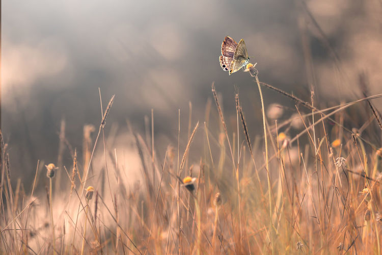 Close-up of butterfly on grass in field