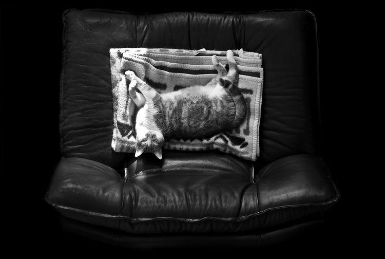 Cat Model Cat Cat On Chair Cat On Railing Cat On Sofa Cats