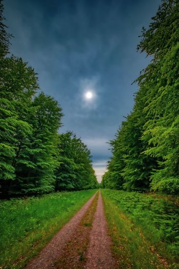 Silent woods Plant Sky The Way Forward Tree Direction Diminishing Perspective Nature Growth Tranquility Beauty In Nature Tranquil Scene Road No People Scenics - Nature Green Color vanishing point Cloud - Sky Transportation Land