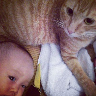 終於 醒著合照成功!! 箴箴 Cats Cute Cat neko babygirl baby