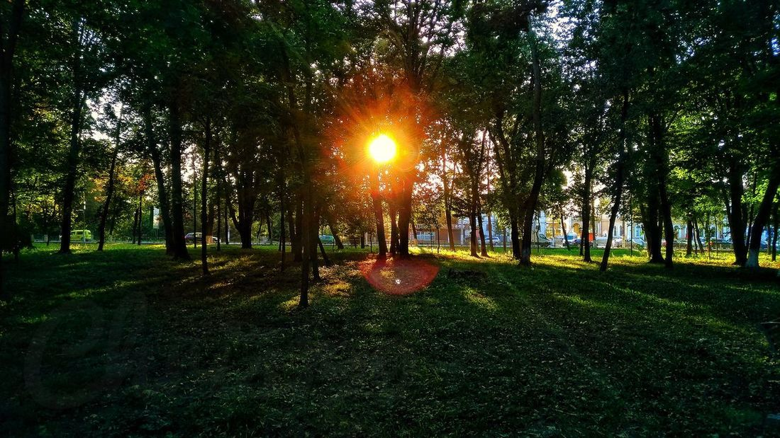 Prairie Light And Shadow Dawn Of A New Day Forest Sun Behind Trees Green Color Green Leaves Grass Dawn Sunset Intense Hot Weather Tree Sunset Sunlight Sun Silhouette Park - Man Made Space Sunbeam Field Lens Flare Sky Idyllic Shining Tranquility Scenic View Foreground Orange Color Calm Scenics