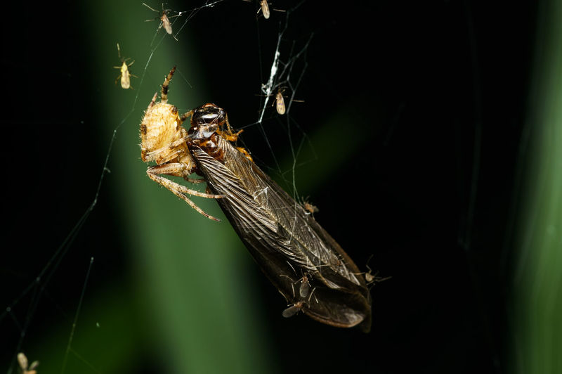 Close-Up Of Spider And Insect On Web