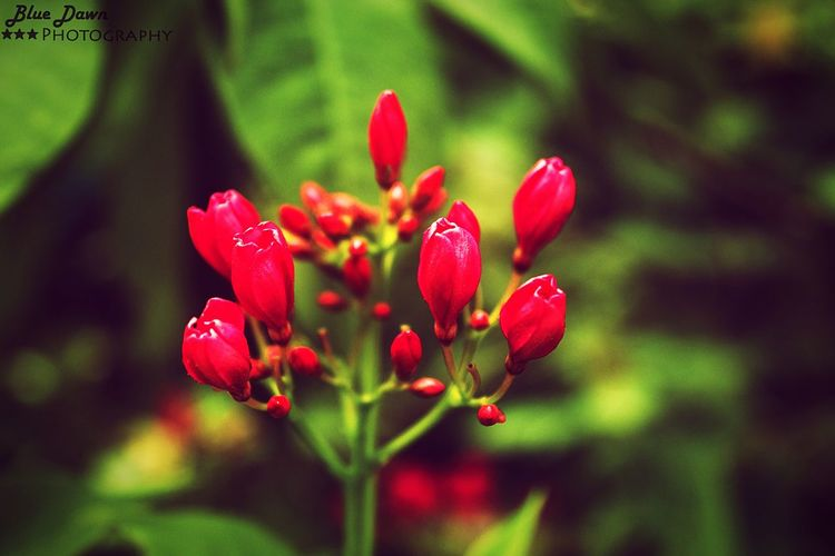 Sometimes you need to look deeper into the nature 😉 !!! Macro_flower Macro Hanging Out Taking Photos Hello World Check This Out Folow4folow EyeEm Best Shots - Nature Eye Em Gallery Taking Photos Enjoying Life Macro_collection Bluedawnphotography