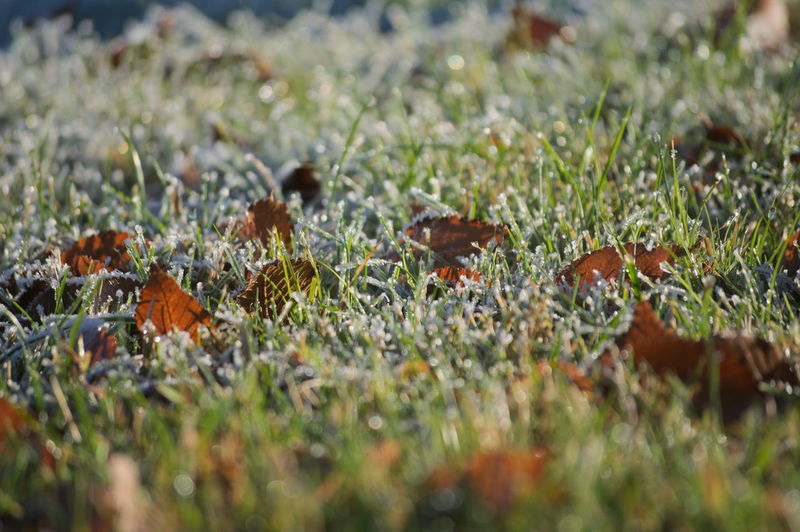 Beauty In Nature Close-up Cold Temperature Day Field Freshness Leaf 🍂 Leaves🌿 Nature No People Outdoors Plant Rime Winter