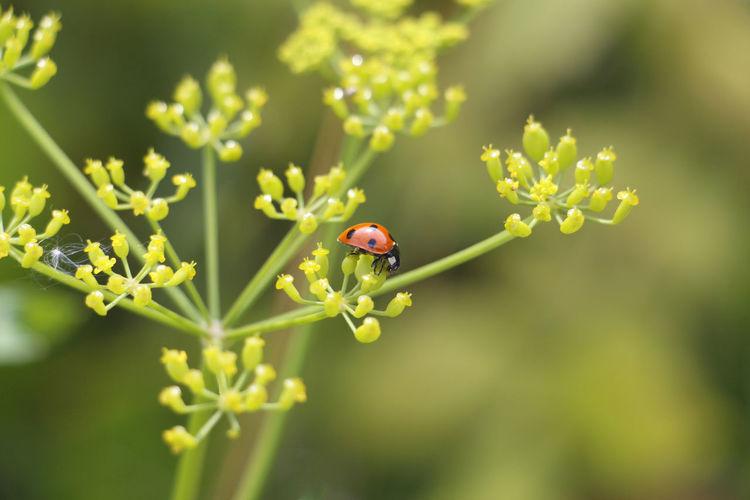 Ladybug on