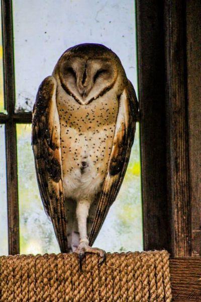 Washington Wildlife Northwest Trek Owl