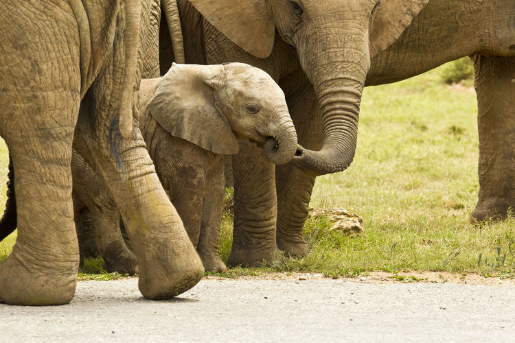 Young elephant elephant being touched by its mother in the wild game reserve African Elephant Animal Animal Themes Animal Wildlife Animals In The Wild Contrasts Day Elephant Fragility Mammal Nature No People Outdoors Togetherness Young Animal