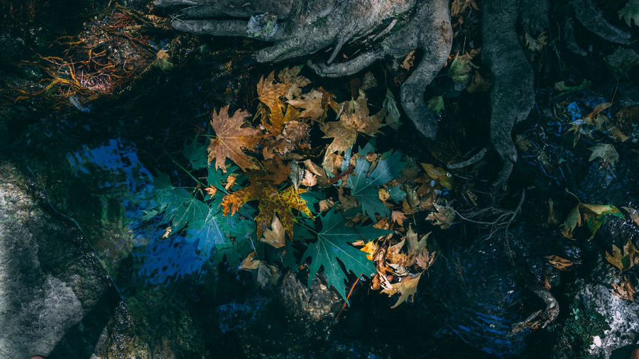 High angle view of autumn leaves in forest