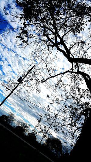 Tree And Sky Beautiful Nature Louisiana Skies Eye Of Ky Louisiana Cellphone Photography Fall_collection