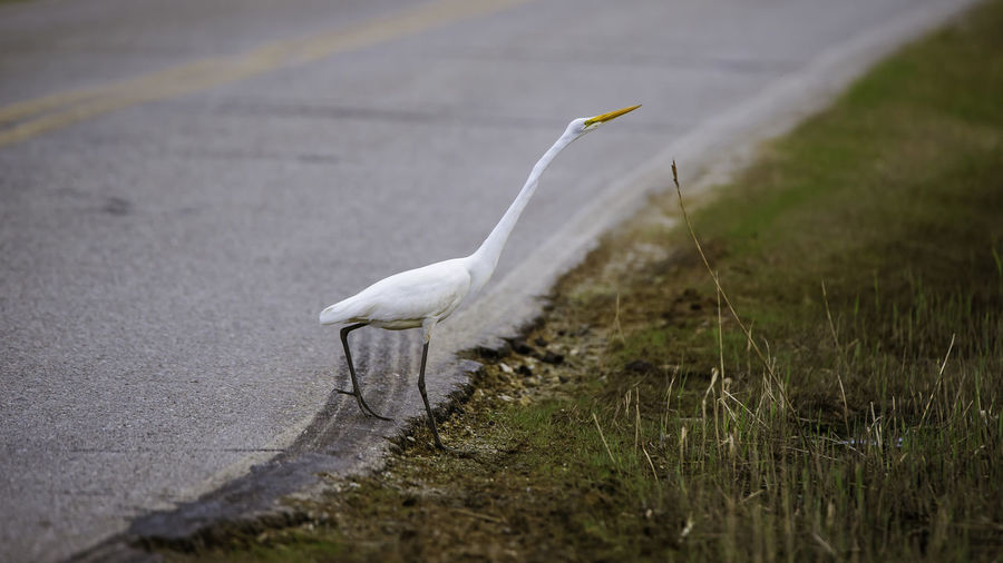 Egret stalking lunch EyeEmNewHere Lightroom Cc Nikond750 Sleeklens Stalking Fish ThroughMyLens WithMyTamron Animal Themes Animal Wildlife Animals In The Wild Bird Birds Birdsofeyeem Birdsofinstagram Day Deadtree Great Egret Nature No People One Animal Outdoors Perched Bird Portcity Tamron150600mm Wading Bird