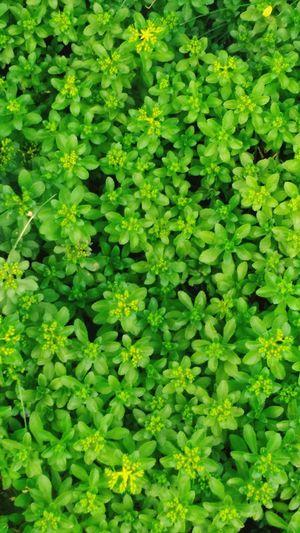 Plants Green Leaves Sunnymood Enjoying Life Nature a natural cellphone wallpaper haha~