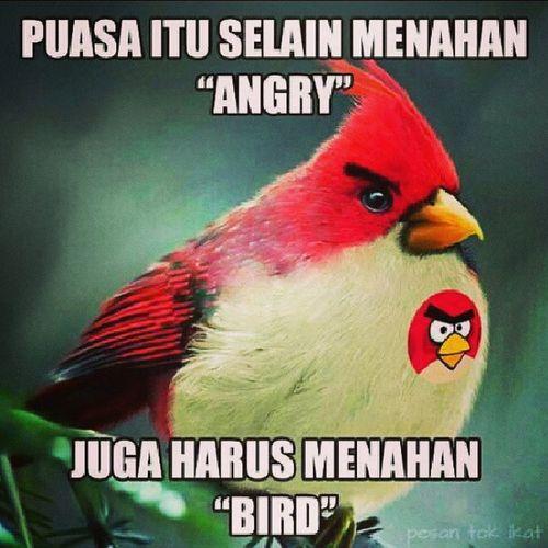 selamat berbuka smua.. :) Angry_bird Bird Berbuka