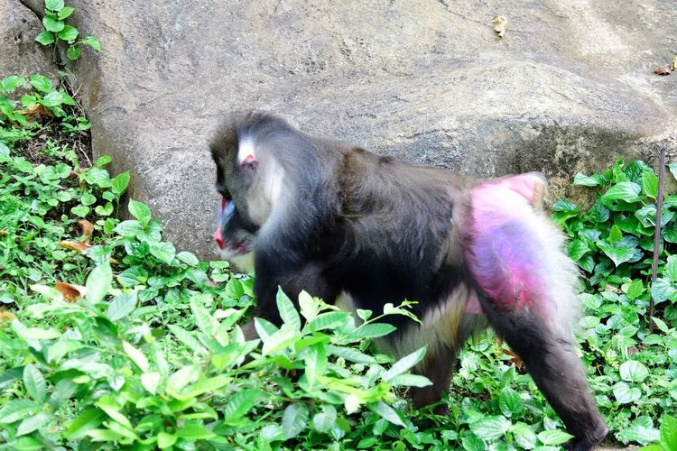 Wildlife and forestry Animal Animal Themes Animal Wildlife Animals In The Wild Day Green Color Growth Leaf Mammal Monkey Nature No People One Animal Outdoors Pink Color Plant Plant Part Primate Rock Vertebrate