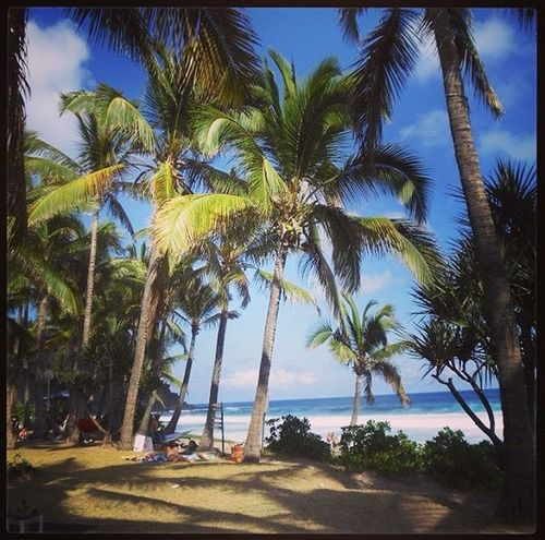 Memories Reunion  Oceean Indian Grandanse Sea Sealife Palm Palmtrees