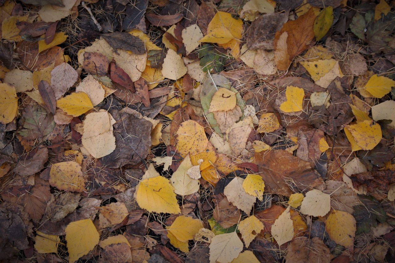 HIGH ANGLE VIEW OF YELLOW LEAVES ON STONE