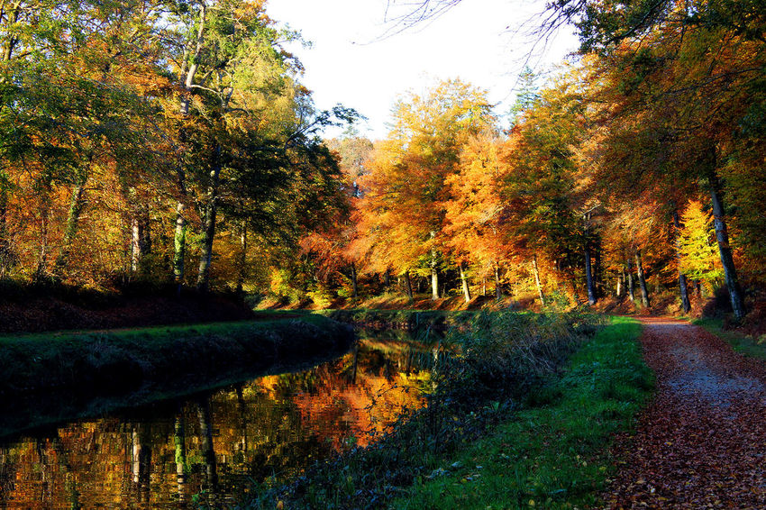 Autumn Forest Outdoors Reflection River Tranquil Scene Tree