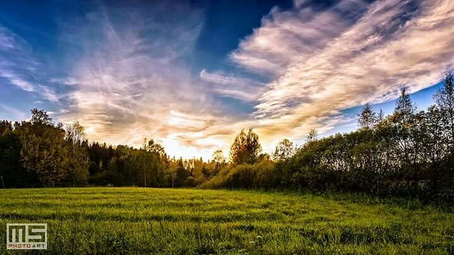 Summer memories. Nikon Nikonphotography Nature Summer Trees Sky Clouds Sun Grass