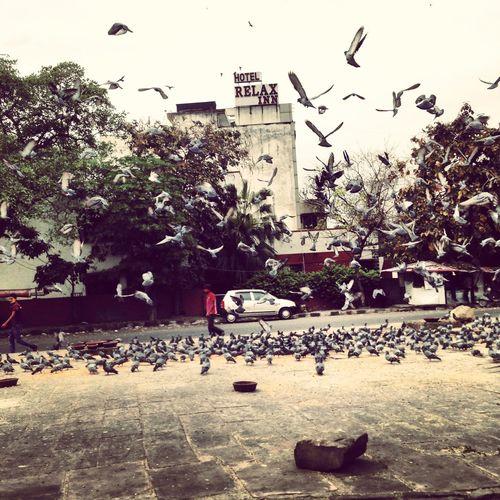 Bird Flying Nature