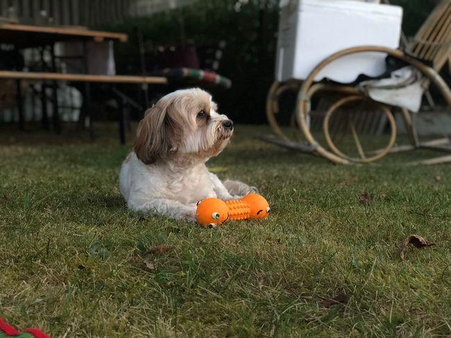 EyeEm Selects Animal Themes Pets Animal Domestic Mammal One Animal Dog