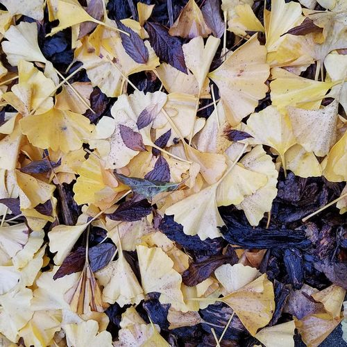 Beauty In Nature Taking Photos Beautifully Organized Unedited The Purist EyeEm Gallery Eyeem Market Eyeemphoto Hello World Close-up Natural Pattern The Week On Eyem Washington State Fall Beauty Freshness Marysville,WA Fall Collection EyeEm Nature Lover