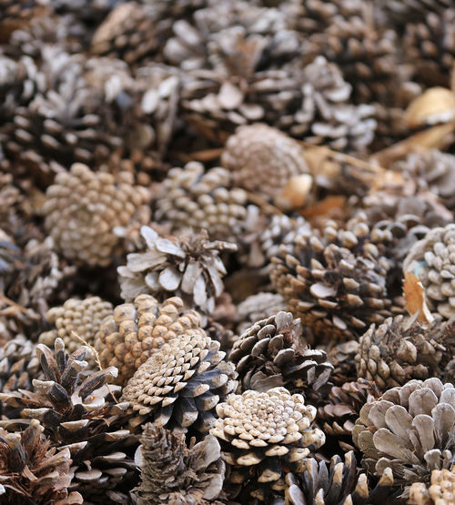Texture from a set of pine cones close-up Large Group Of Objects Abundance Backgrounds Still Life Close-up No People Dry Selective Focus Focus On Foreground High Angle View Cone Pine Cone Pine Cones Cones Texture Close Up Closeup