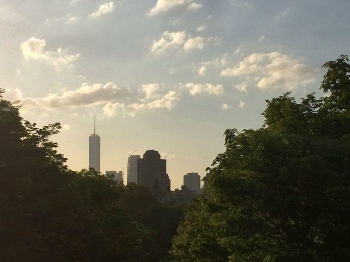 Brooklyn Fort Greene Manhattan Skyline Freedom Tower Trees Suny Day