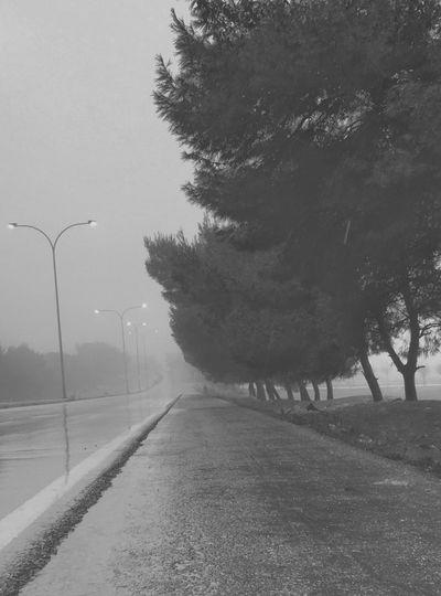 IPS2016Winter Bnw Foggy Morning