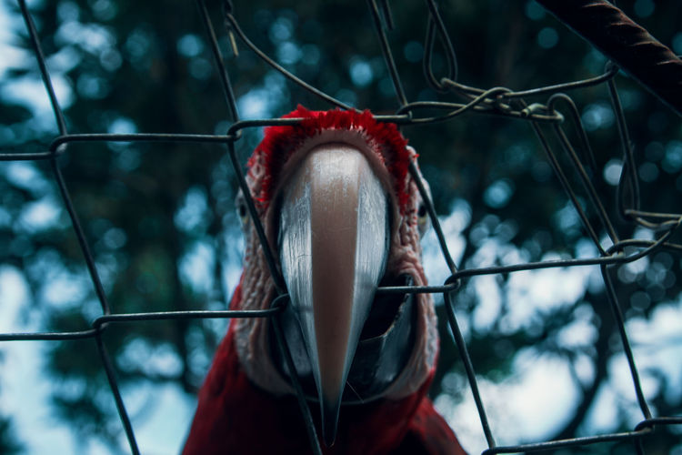 Low angle view of macaw see through chainlink fence