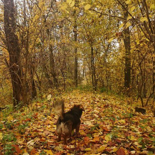 piękna jesień idzie ? Beautiful Day Relaxing Spacer Dog