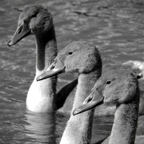 Brothers Bw_collection Blackandwhite EyeEm Best Shots - Black + White Birds