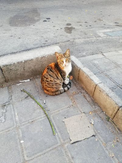 High angle view of cat sitting on sidewalk