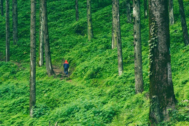 Man trekking