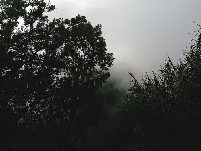 Tree Fog Silhouette Tree Area Rural Scene Sky Landscape