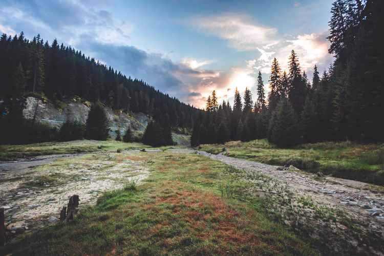 Wilderness landscape against blue cloudy sky on sunrise Sunset_collection Beauty In Nature Cloud - Sky Coniferous Tree Day Environment Forest Growth Idyllic Land Landscape Mountain Nature No People Non-urban Scene Outdoors Pine Tree Plant Scenics - Nature Sky Sunset Tranquil Scene Tranquility Tree