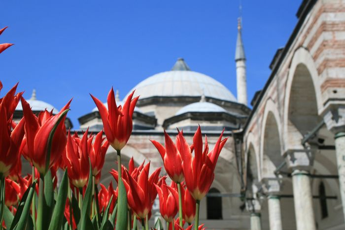 EyeEmNewHere Tulips Istanbul Turkey Ottoman Empire Topkapi Palace Architecture Flower Building Exterior Day Built Structure Outdoors Religion Clear Sky Blooming Sky Fragility Beauty In Nature Low Angle View Growth Freshness EyeEmNewHere