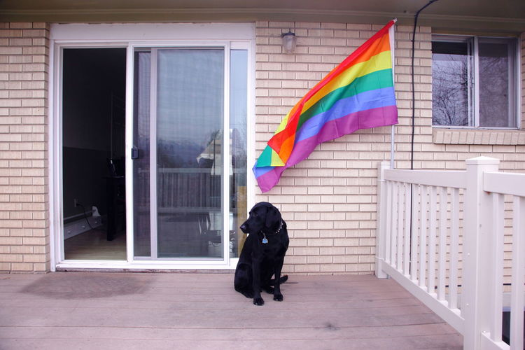Full Length Of A Dog On Porch With Rainbow Flag