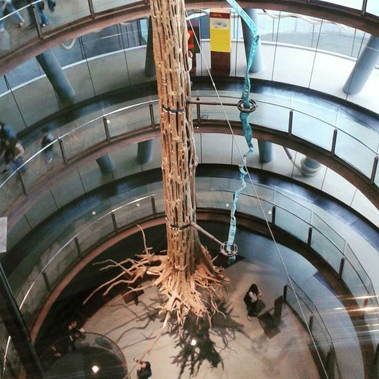 The trunk that can't float Cosmocaixa Barcelona Natural Science museum catalunya earth amazon architecture ramps heights