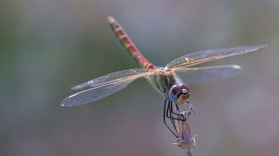 Close-Up Of Dragonfly Pollinating On Flower