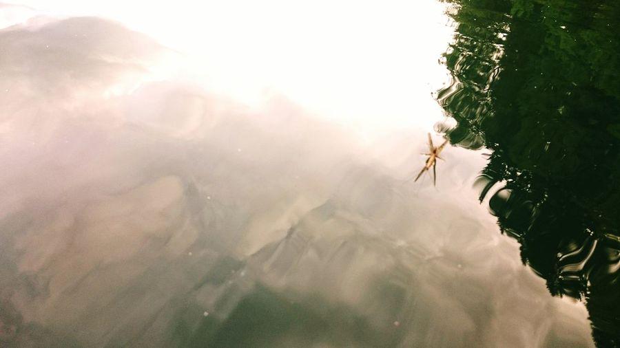 EyeEm Selects Mayfly Maifliege Flyfishing  Fliege Tranquility Water Nature Flood Beauty In Nature Fliegenfischen Danica Ephemera Fliege Auf Wasser Wasserinsekt First Eyeem Photo