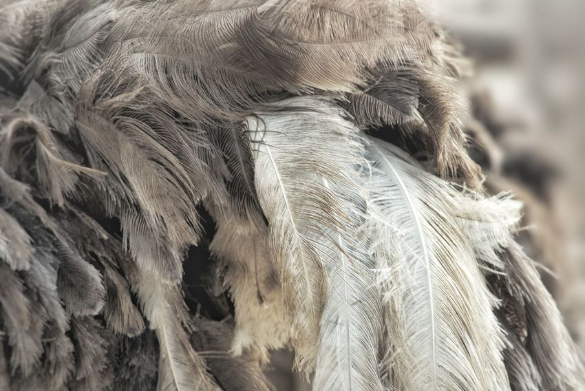 Animal Themes Background Beauty In Nature Ostrich Feather Ostrich Bird Photography Animal Wildlife Bird Birds Patterns In Nature Patterns & Textures Pattern, Texture, Shape And Form Feather  Outdoors Pattern Close-up Abstract Textured  Full Frame Backgrounds Nature